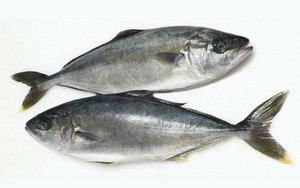 amberjack-of-mediterranean-sea