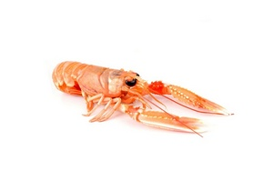 norway-lobster-of-mediterranean-sea